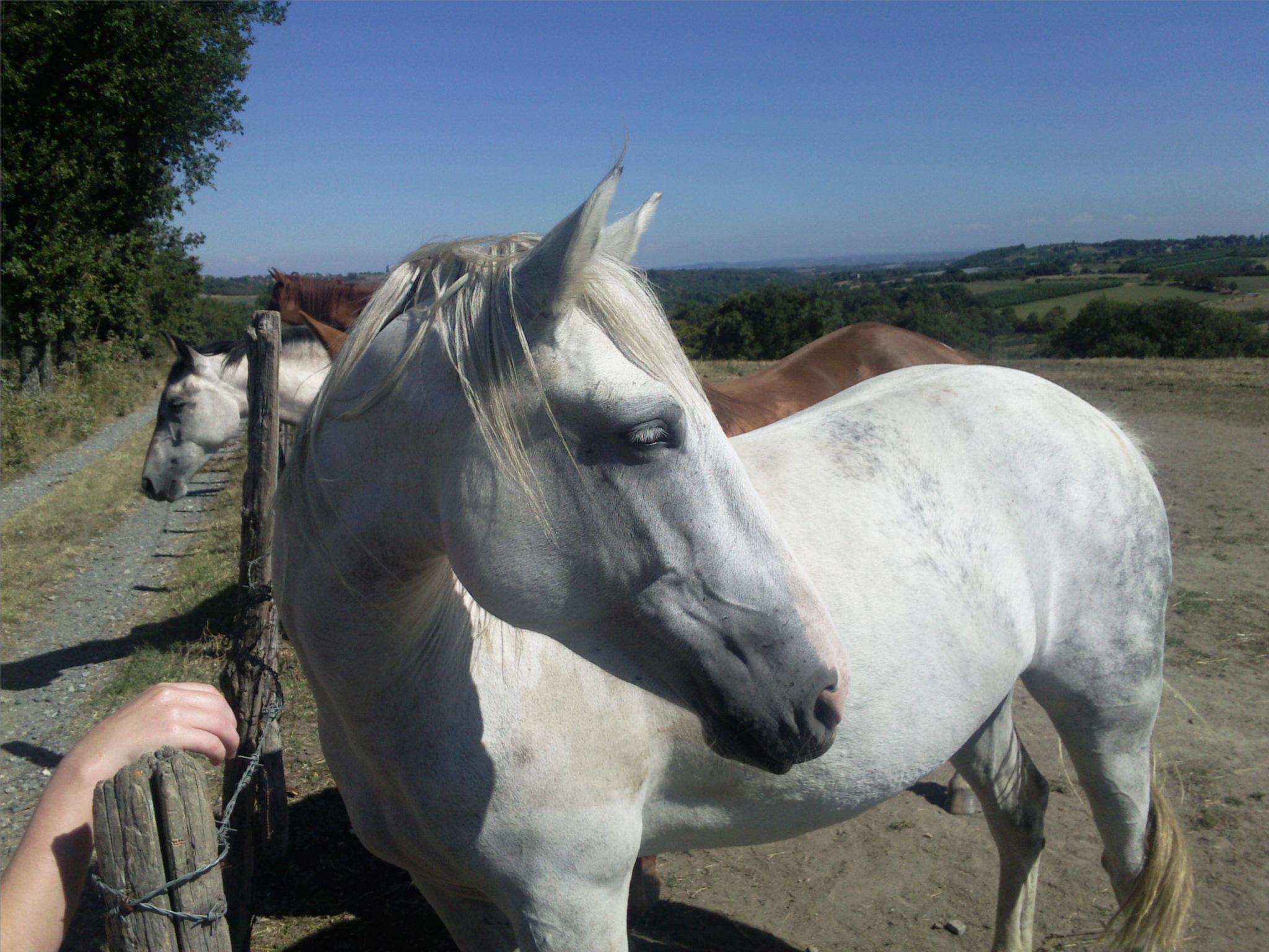 La Thérapie par le cheval